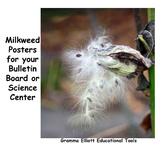 Milkweed Posters with SEM Image STEM