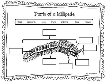 Millipede Body Parts Label