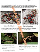 Mimicry Lesson With Informational Text Article