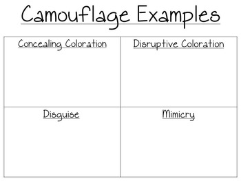 NGSS Aligned: Mimicry and Camouflage Booklet