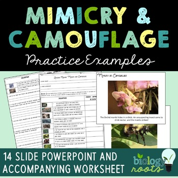 mimicry and camouflage worksheet and presentation by