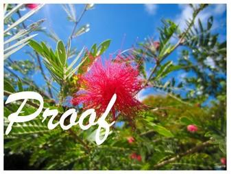 Mimosa Flower Stock Photos