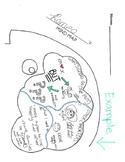 Mind Map Graphic Organizer