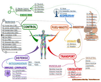 Mind Map Template Worksheets Teaching Resources Tpt