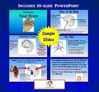 Mindfulness Worksheet & PPT - Your Brain