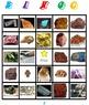 Minerals Bingo
