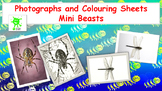 Mini Beast Photos and Coloring Sheets