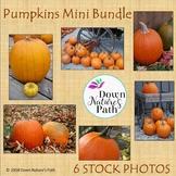 Mini-Bundle of Six Photos of Pumpkins
