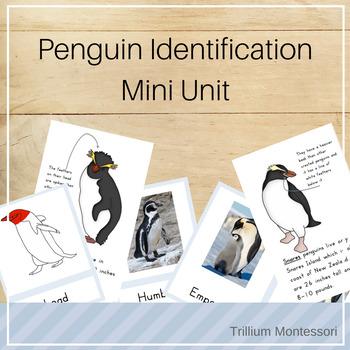 Mini Unit: Penguin Identification