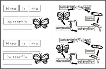 Mini Writing Book: Butterfly Life Cycle! Basic (4 differentiated versions)