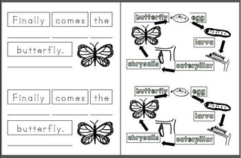 Mini Writing Book: Butterfly Life Cycle! Sequenced Vocab (4 differentiated ver.)