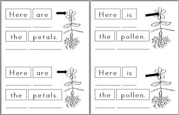 Mini Writing Book: (Parts of a) Flower! (4 differentiated versions)