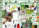Mini beasts and insects topic pack plus Very Hungry Caterpillar resources