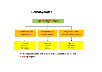 Mini booklet of Carbohydrates (resource booklet) for nutrients Unit plan