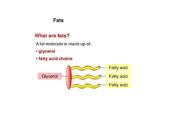 Mini booklet of Fats (Nutrients resource booklet)