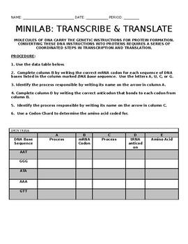 MiniLab - Transcription & Translation  (PAPER LAB)