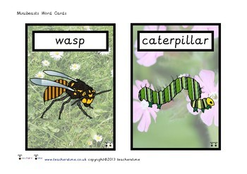 Minibeast Name Cards