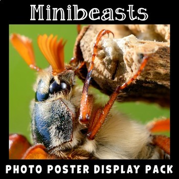 Bugs Insects Minibeasts Photo Poster Display Pack