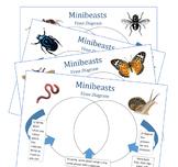Minibeast Venn Diagrams