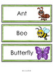 Minibeasts, Insects, Bugs Word Cards
