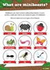 Minibeasts Insects Teaching Resource Pack