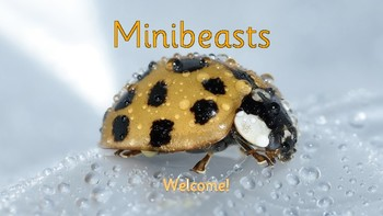 Minibeasts slideshow/pdf