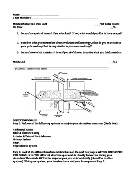 mink dissection pre lab and lab by glussy science tpt rh teacherspayteachers com mink dissection student guide answer key Mouse Dissection Guide