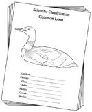 Minnesota State Bird Notebooking Set (Common Loon)