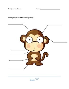 Mir Monkey Parts of the Body
