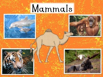 Miraculous Mammals! PPT, Riddle game, and 2 Worksheets!
