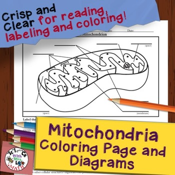 Mitochondria Cell Diagram Coloring Page and Reading Page