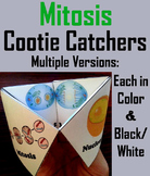 Mitosis Activity with Cellular Structures (The Cell Cycle Unit)