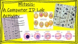Mitosis - A Computer ID Lab Activity! Or Complete Using Li
