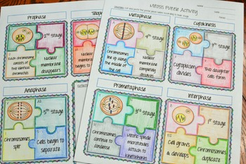 Mitosis Activity by Math in Demand | Teachers Pay Teachers