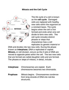 Mitosis Activity Common Core Lesson