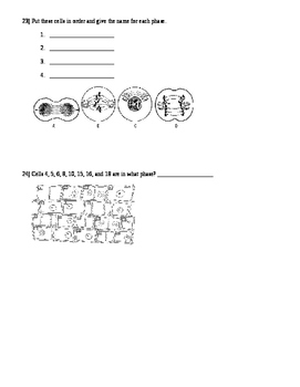 Mitosis And Meiosis Test / Quiz