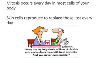 Mitosis Asexual Reproduction PowerPoint Worksheets & Answers