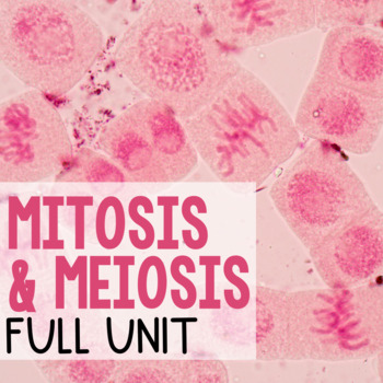 Cell Cycle Bundle