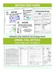 Cell Division Mitosis Bundle