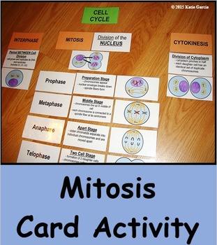 Mitosis Card Activity