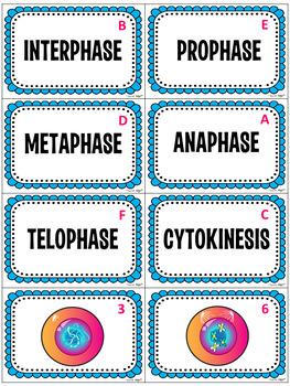 Mitosis Card Sort