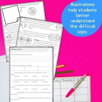 Mitosis Cell Cycle Nonfiction Reading and Graphic Organizer Activity
