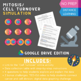 "Mitosis/ Cell Division ""Cell Turnover"" Simulation Google D"