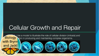 Mitosis and Cell Differentiation: Growth and Repair PPT