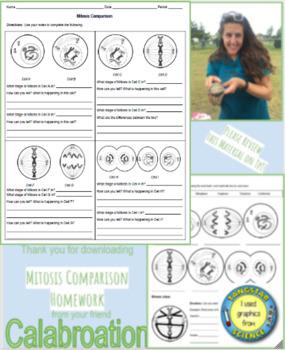 Mitosis Comparison Homework