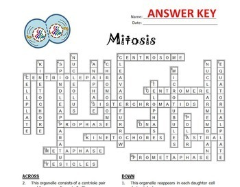 Mitosis Crossword {Editable} by Tangstar Science | TpT