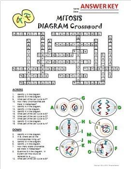 animal cell diagram crossword answers | Diarra