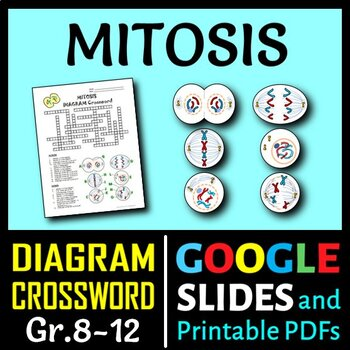 Mitosis    Crossword    with    Diagram     Editable  by Tangstar