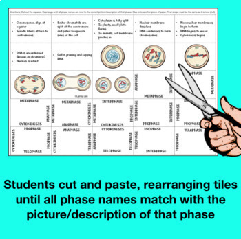 Mitosis Cut and Glue Puzzle by Laney Lee   Teachers Pay ...