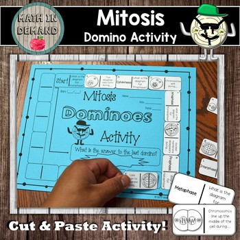Mitosis Domino Activity